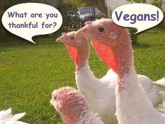 turkeys joking about being thankful for vegans